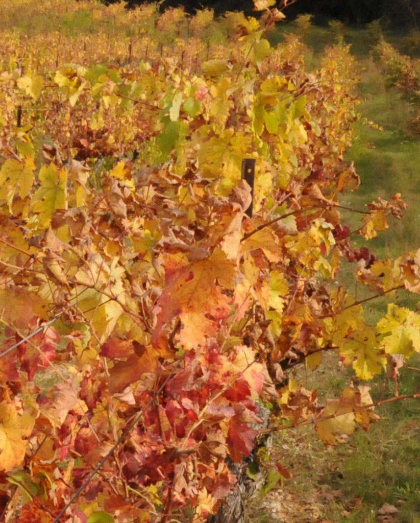 Vignoble et savoir-faire du Château Grand Callamand